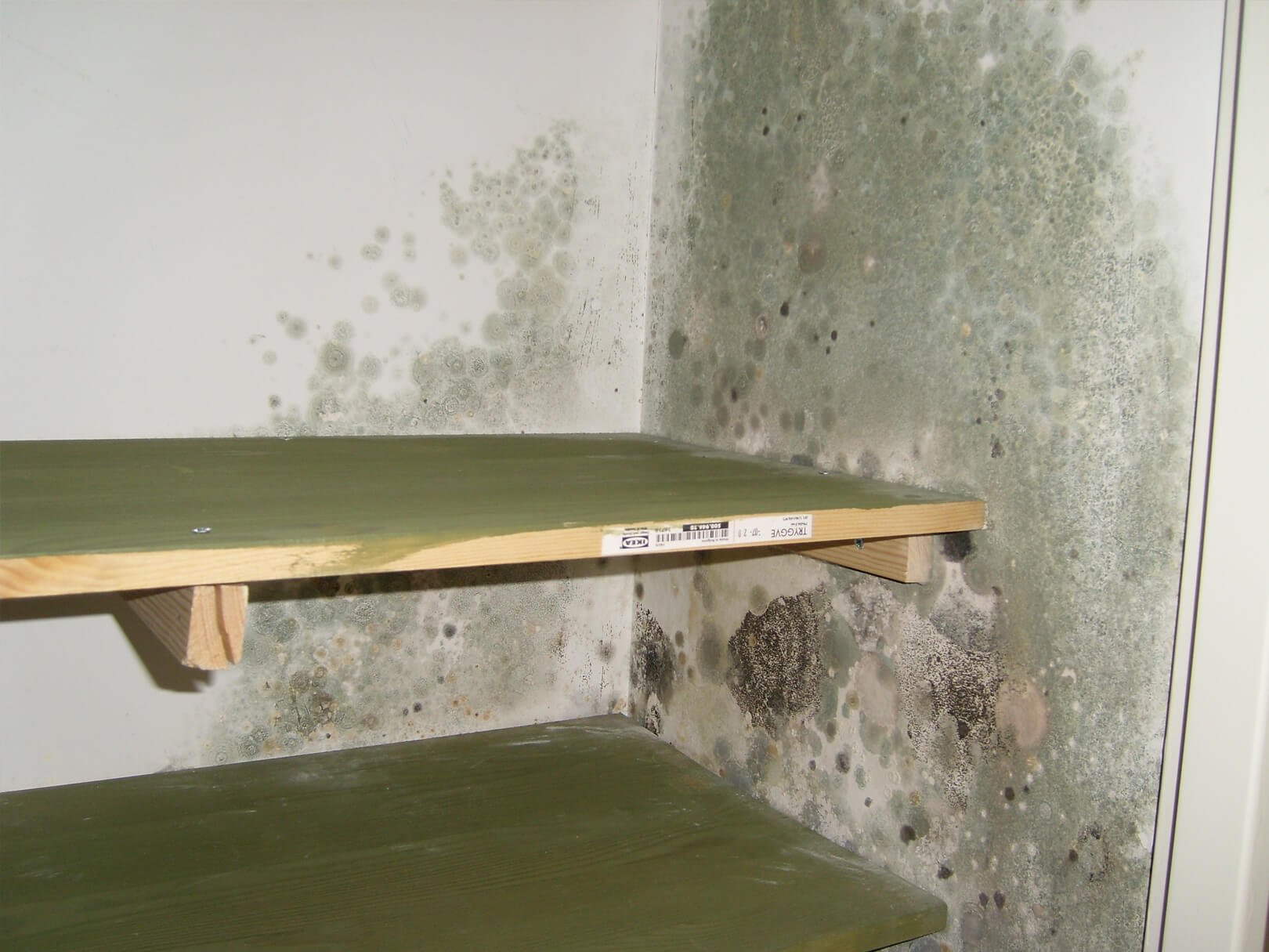 Mould hygiene cleanup