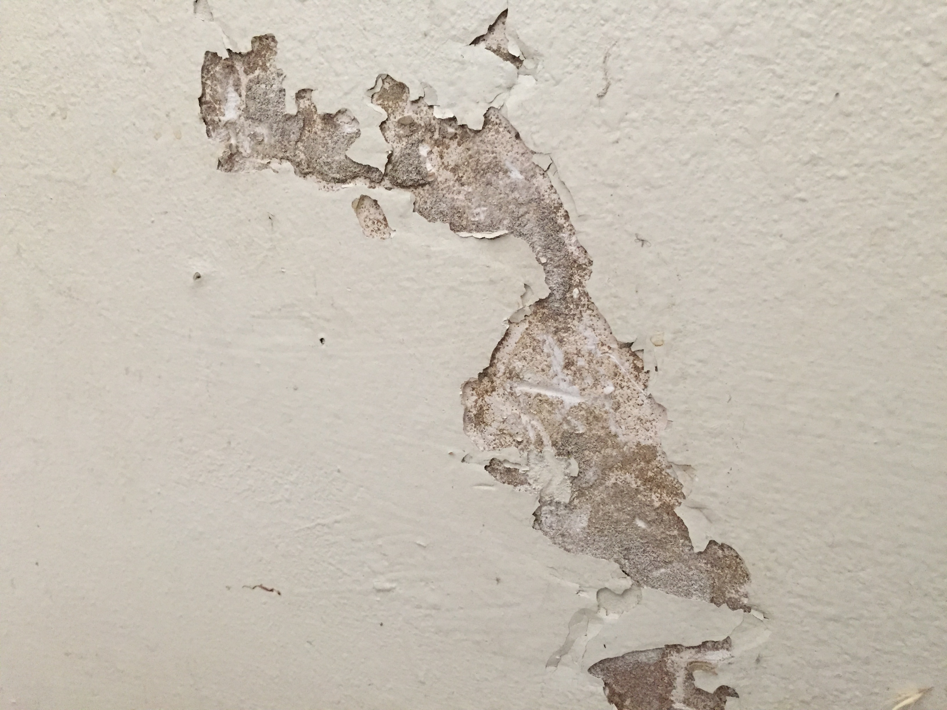 Water Damaged Drywall and Plaster