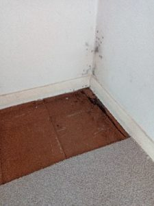 flood damaged floor