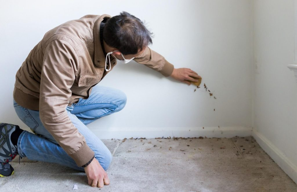 Homeowner investigating damp patch on wall of home